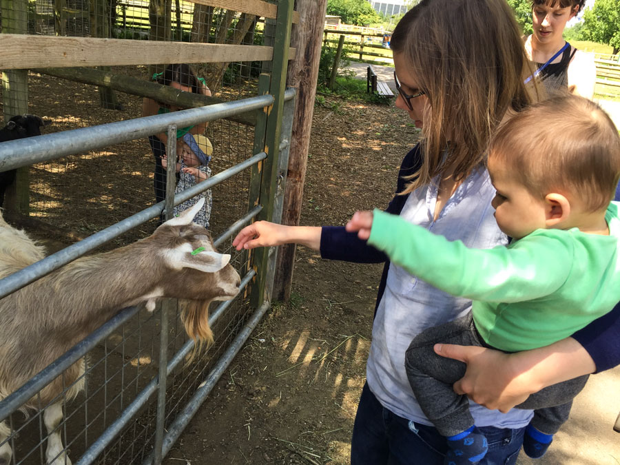 Feeding goats with Mama